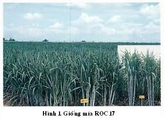 roc-17-hinh.jpg