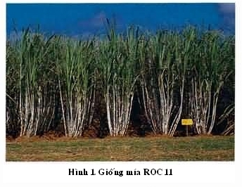 roc-11-hinh.jpg