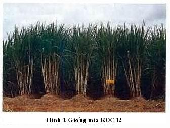 roc-12-hinh.jpg