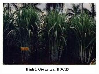 roc-15-hinh.jpg